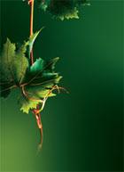 Yves Rocher...une belle plante, active depuis 50 ans ! - Jean Watin-Augouard
