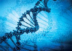 L'ADN, une boîte noire par Jean Lambert