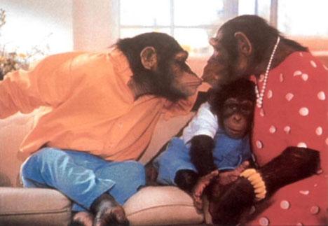 famille-singes.jpg